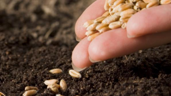 seed_dirt_planting.jpg