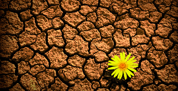 resilience_flower_cracked_earth.jpg